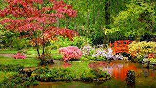Japanese Garden | Relaxing Music by Peder B. Helland