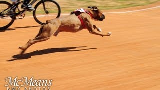 Dog vs Human BMX Race