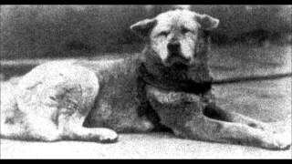 Hachiko Real Story