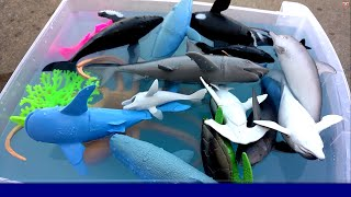 Lets Learn Names Of SEA ANIMALS with TOYS- Kids Learning Fun-Sharks,Whales,Octopus
