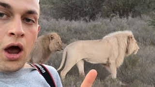 I WENT ON A SAFARI IN AFRICA AND STOOD FEET AWAY FROM A CHEETAH   Chris Klemens
