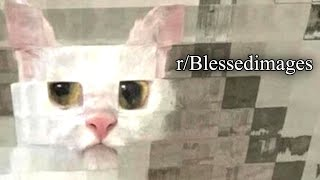 r/Blessedimages | CAT.