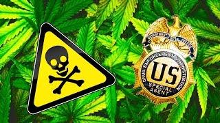 DEA Greenlights Dangerous Marijuana