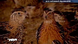 Farmers upset by total prohibition of Quail ( Kada) Meat