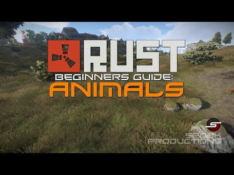 Ultimate Rust Beginners Guide (UPDATED)