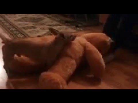 Xxx Mp4 Dog Fuck Teddy Bear 3gp Sex