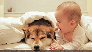 Dog Loves Baby When the First Time They Met Compilation NEW