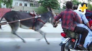 Donkey Racing In Karachi