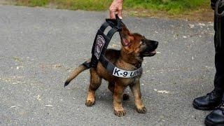 Polizeihunde im Dienst - So behilflich sind Hunde geworden! - (DOKUMENTATION 2016 HD *NEU*)