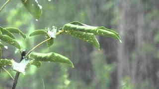 8h - Orage sans tonnerre - Bruit de la pluie pour se détendre et dormir