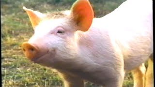 Babe (1995) Trailer (VHS Capture)