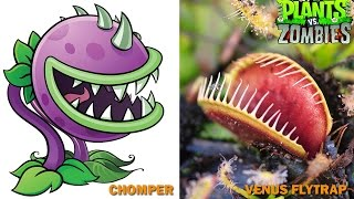 Plants vs Zombies Characters in Real Life