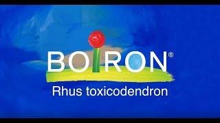 Rhus Tox