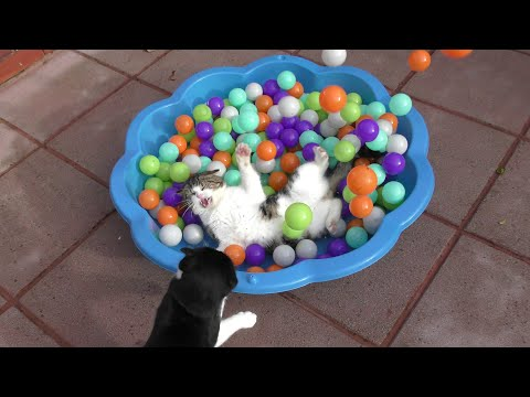 Funny Cats Compilation Video - 4K Ultra HD 2160p - 2016 - Original - 猫视频