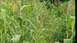 Sistema de plantio direto para agricultores familiares - Dia de Campo na TV