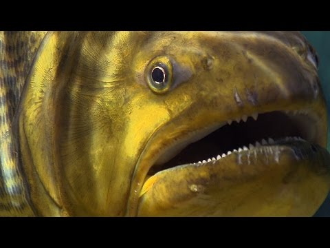 Xxx Mp4 Piranha Feeding Frenzy Planet Earth BBC Earth 3gp Sex