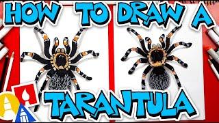 How To Draw A Tarantula (Red Knee)
