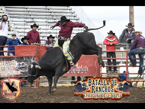 Xxx Mp4 La Batalla De Rancho En Sublimity Oregon¡¡ La Batalla De Rancho Evolucionando El Jaripeo 3gp Sex