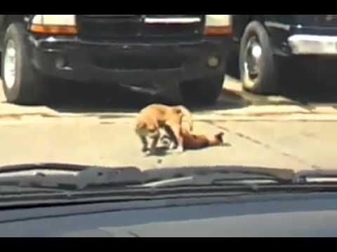 Perro se desmaya en plena acción