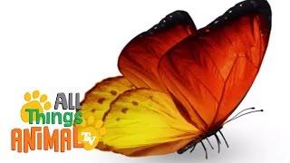 BUTTERFLIES | Animals for children. Kids videos. Kindergarten | Preschool learning