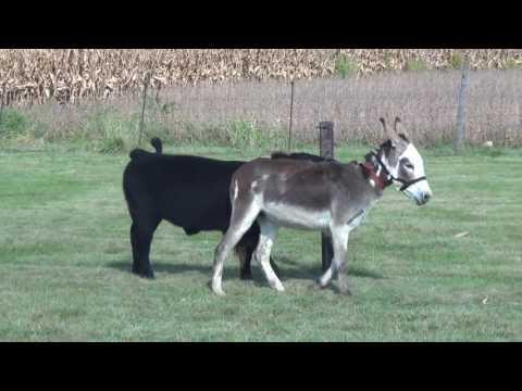 Xxx Mp4 Donkey 2 3gp Sex