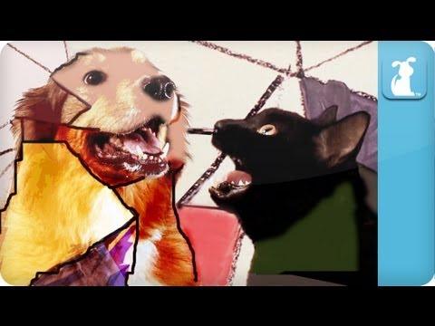 Gotye Dog Parody - Somebody That