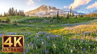 (3 hours) 4K UHD Relaxation video: Mount Rainier National Park Washington State, Nature Sounds - 1
