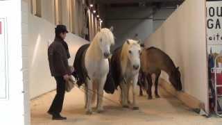 Hund und Pferd auf der Messe Dortmund