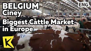 【K】Belgium Travel-Ciney[벨기에 여행-씨네]유럽 최대의 소시장/Ciney/Biggest Cattle Market in Europe/Livestock Market