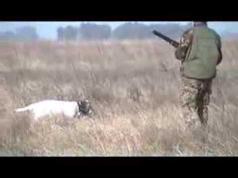 caza menor en azul argentina perdiz y liebre