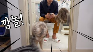 이단점프하는 고양이들 겐지인줄 - 화장실에서 생긴 일