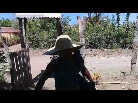 Xxx Mp4 El Bulto Y El Campesino 3gp Sex