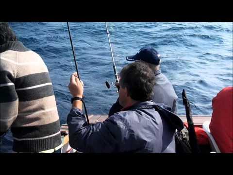 Pesca Pargos em cascais no Barco Micas.wmv