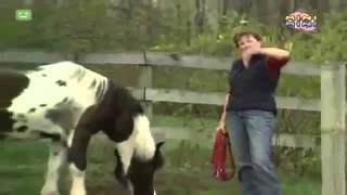 Bajki dla dzieci po polsku   Świat Elmo   Konie, o koniach