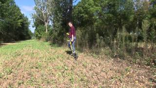 3.  Which Trees Are Best for Intercropping Systems? video