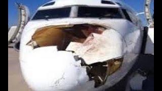 شاهد طائر يصطدم بطائرة كبيرة