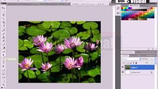 Adobe Photoshop CS6 full Bangla Tutorials step by step part-21 (Tonal,Dodge,Sponge,Burn Tools)