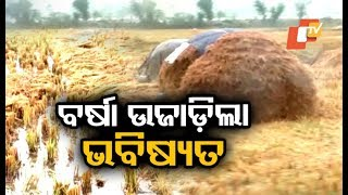 Odisha farmers in distress over crop loss due to rain triggered by cyclone Phethai