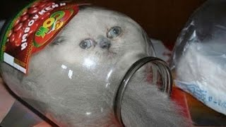 CATS just BEING CATS - Ultimate funny CAT compilation that will make your day!