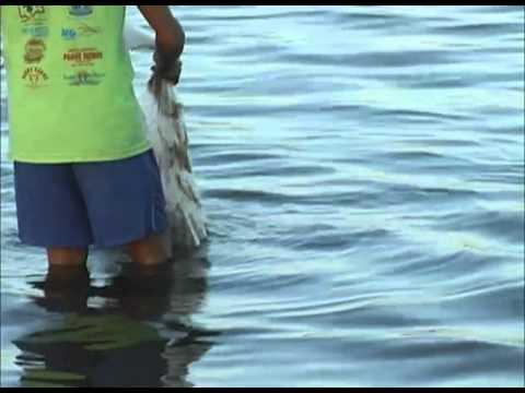 A Pesca do Camarão.f4v