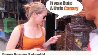 Blusukan Ke Pasar Burung Splendid Malang (indonesian Bird Market) Download Mp3 Mp4 3GP HD Video