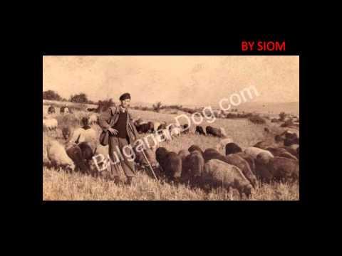 Archive Photos of Bulgarian Shepherd Dog