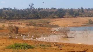 Praia de Três Marias - Mg Voo de pássaros