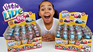 Little Live Pets Surprise Ladybugs & Baby Bugs - Mega Toy Haul Opening | Toys AndMe