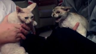 WEIRD BEHAVING CATS and DOGS - You