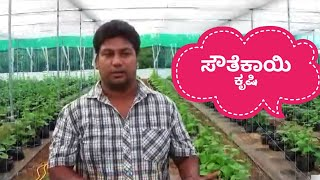 Cultivation Of Cucumber By Hydroponics