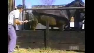 Só Coice de Cavalo - Video Coice