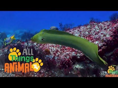Xxx Mp4 EELS Animals For Children Kids Videos Kindergarten Preschool Learning 3gp Sex