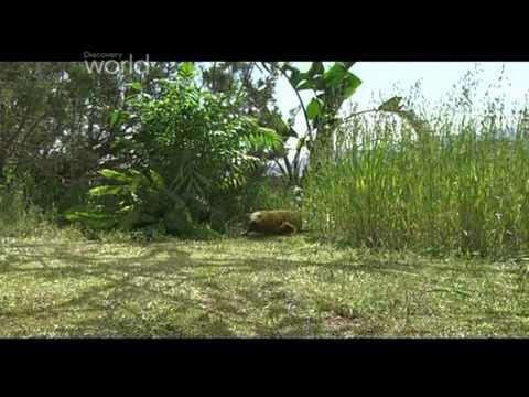 Prehistoryczne B Mozazaur 2 Część 1