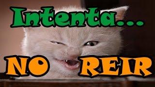 RETO: Intenta ver este Video SIN REIRTE! Los Gatos más graciosos del mundo